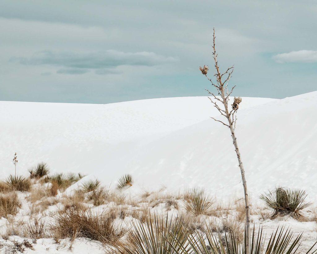 Online besser gefunden werden Landschaftsaufnahme weiße Sanddünen